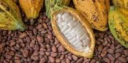 Ghana Should Worry About China's Cocoa Production.