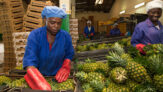 Canada Supports Government With GhC2.5m For Women Agribusiness